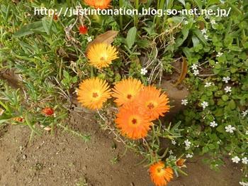 P4300071何の花.jpg